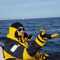 Blinder Passagier an Bord - ein zahmes Goldhähnchen